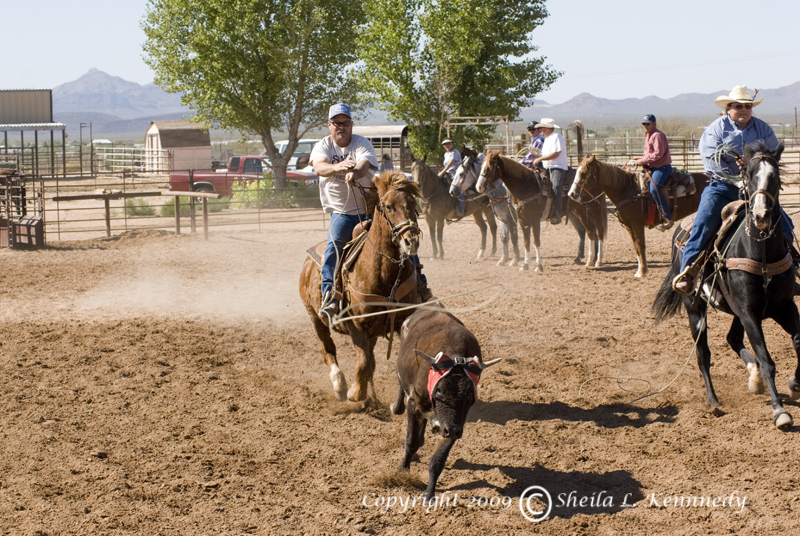 team roping dating sites Date: sunday, july 16th, 2017 time: enter by 10:30 am / rope at 11 am place: gunnison fair grounds open roping pick 1 – draw 2, $150/man, enter 2x (6 runs – $300) draw all – $50 per run (6 runs max – $300) #8 incentive – incentive pot bases on % entries -15 second handicap per team # applies after 2nd steer.